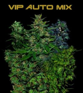 VIP Seeds VIP AUTO Mix