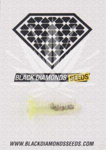 Black Diamonds Seeds AK 47
