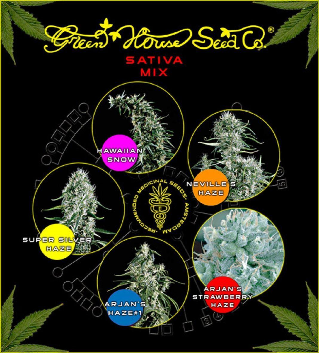 Green House Seeds Sativa Mix