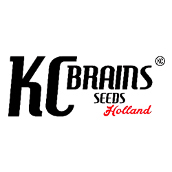 kc brains seeds holland logo