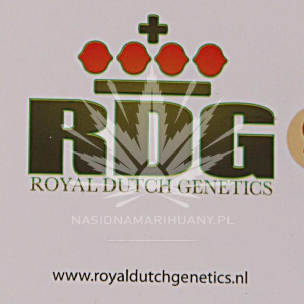 R.D. Cheese Wreck Royal Dutch Genetics