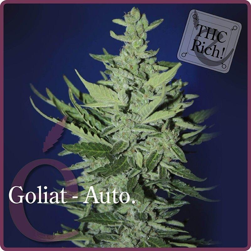 Elite Seeds Goliat  Autoflowering