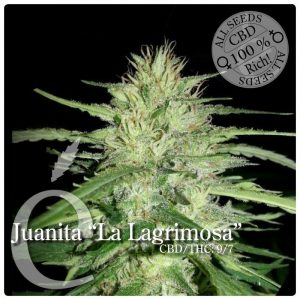 "Elite Seeds Juanita""La Lagrimosa"""