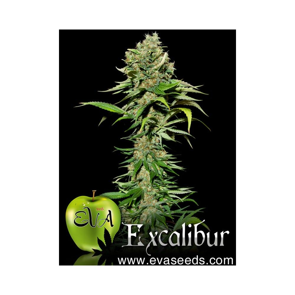 Eva Seeds Excalibur