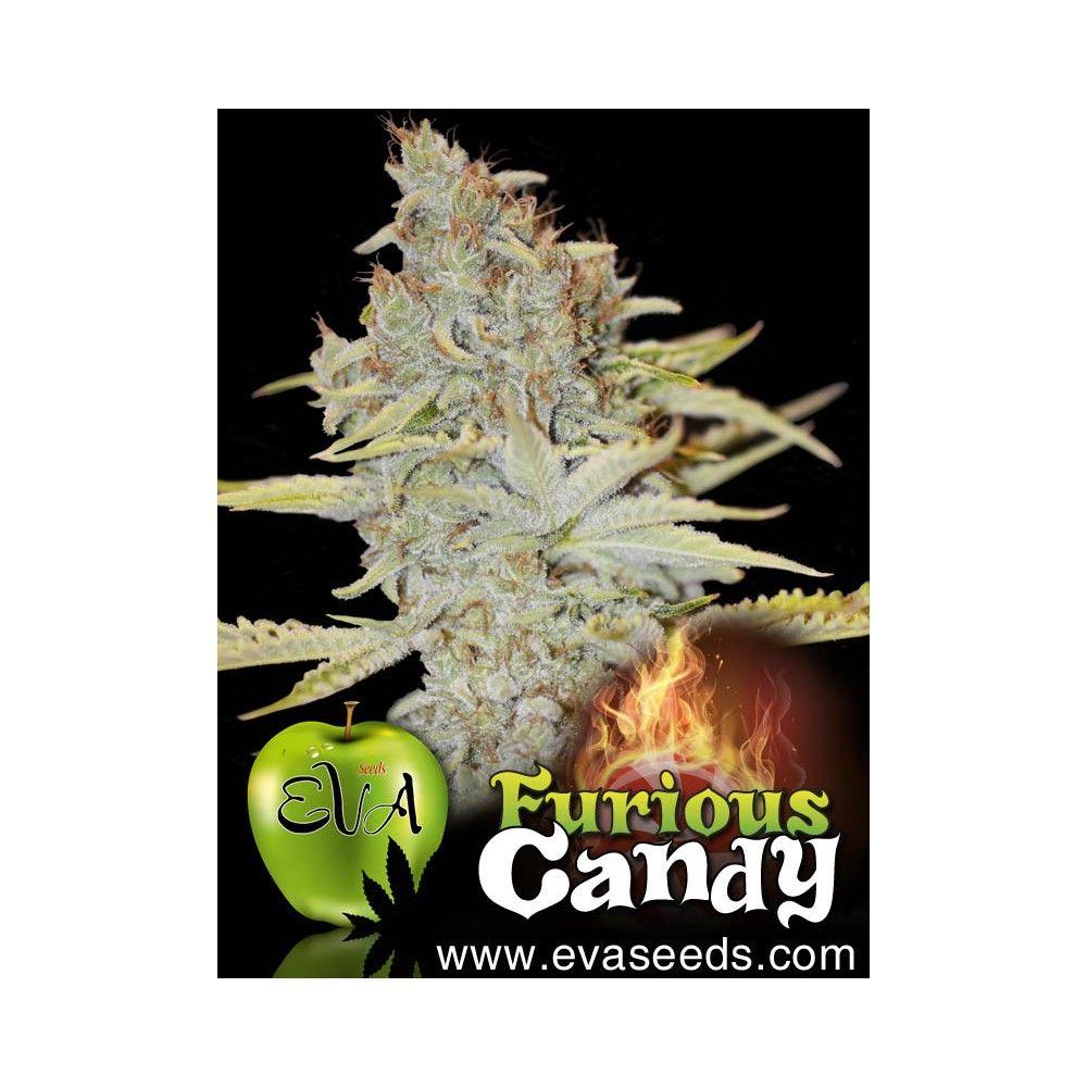 Eva Seeds Furious Candy
