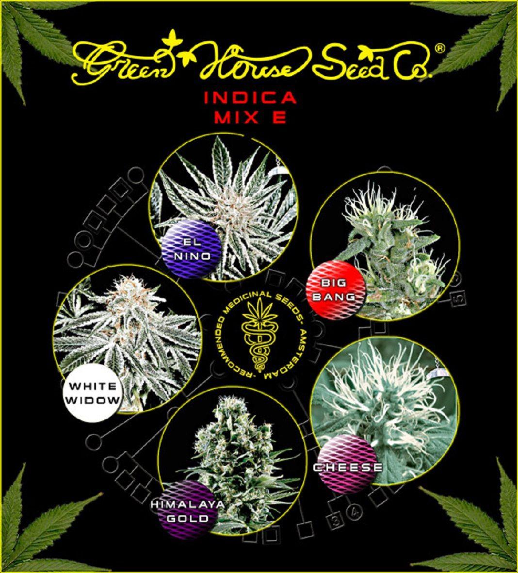 Green House Seeds Indica Mix E