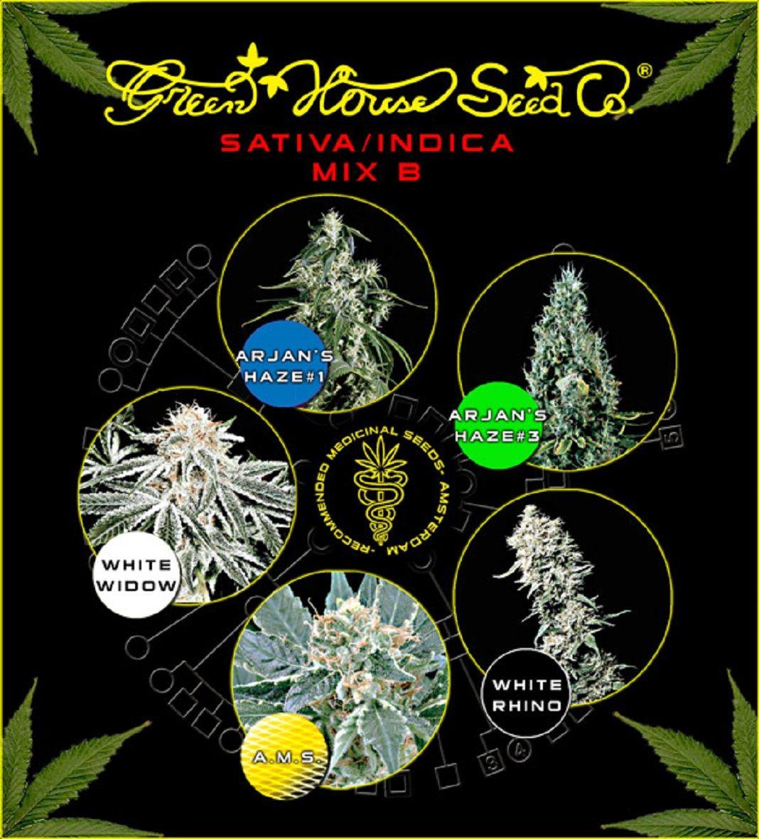 Green House Seeds Sativa/Indica Mix B