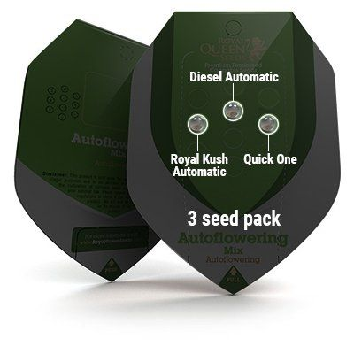 Autoflowering Mix Royal Queen Seeds