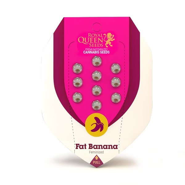 Fat Banana Royal Queen Seeds