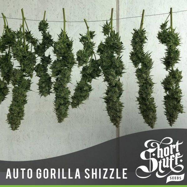 Auto Gorilla Shizzle Hiszpania