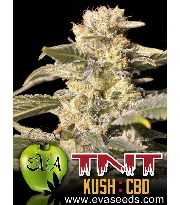 Eva Seeds TNT Kush CBD