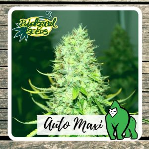Biological Seeds Auto Maxi