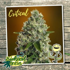 Biological Seeds Critical
