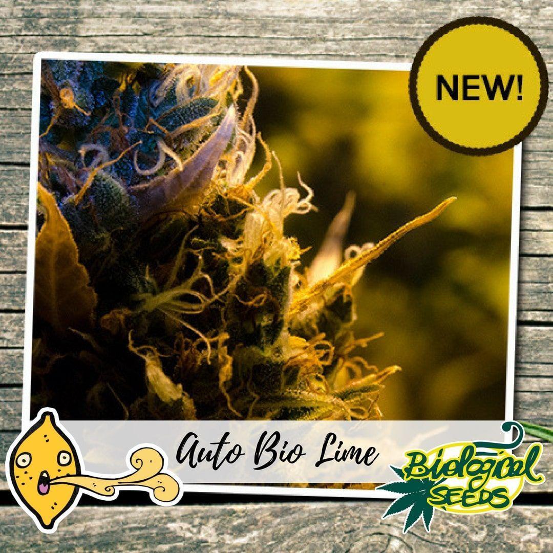 Biological Seeds Auto Bio Lime
