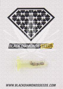 Black Diamonds Seeds Critical King