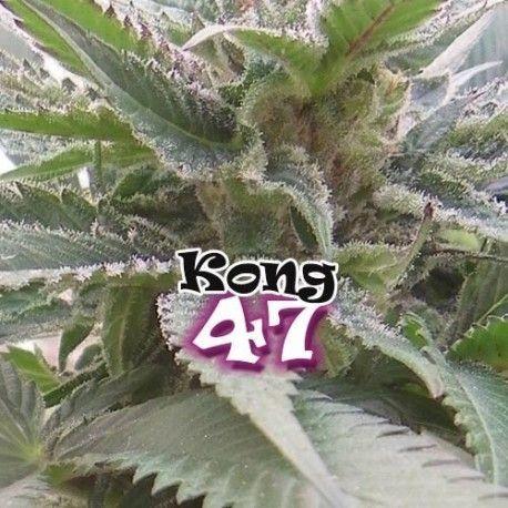 Dr. Underground Kong 47