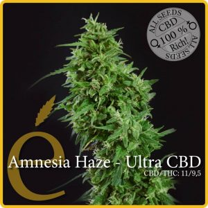 Elite Seeds Amnesia Haze – Ultra CBD