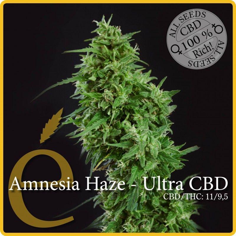 Elite Seeds Amnesia Haze – Ultra CBD