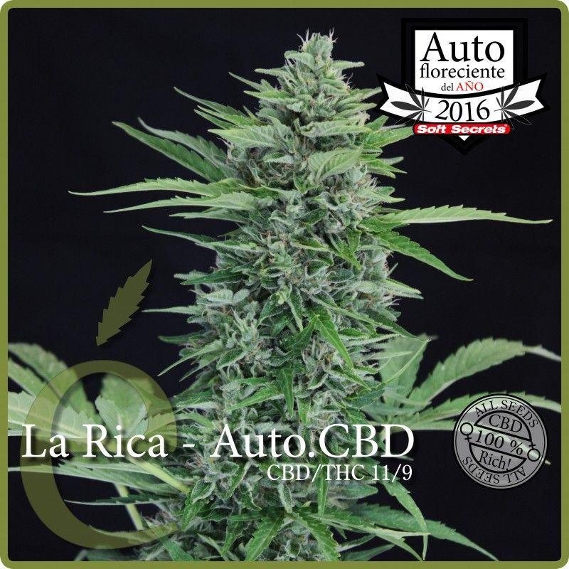 Elite Seeds La Rica  Autoflowering CBD