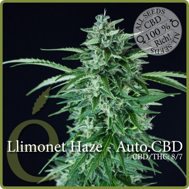 Elite Seeds Llimonet Haze  Autoflowering CBD