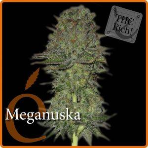 Elite Seeds Meganuska