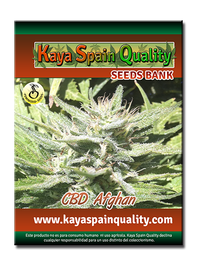 Kaya Spain Quality CBD Afghan