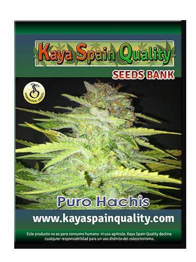 Kaya Spain Quality Puro Hachis