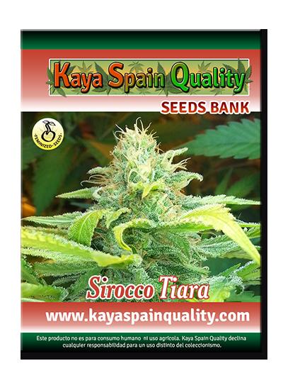 Kaya Spain Quality Sirocco Tiara