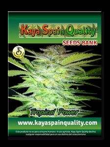 Kaya Spain Quality Tropical Power