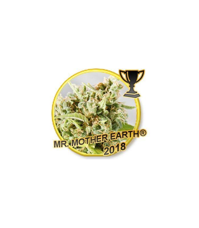 Mr Hide Seeds Mr. Mother Earth