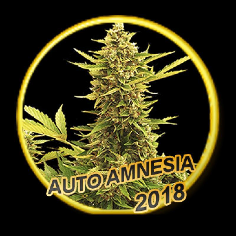 Mr Hide Seeds Auto Amnesia