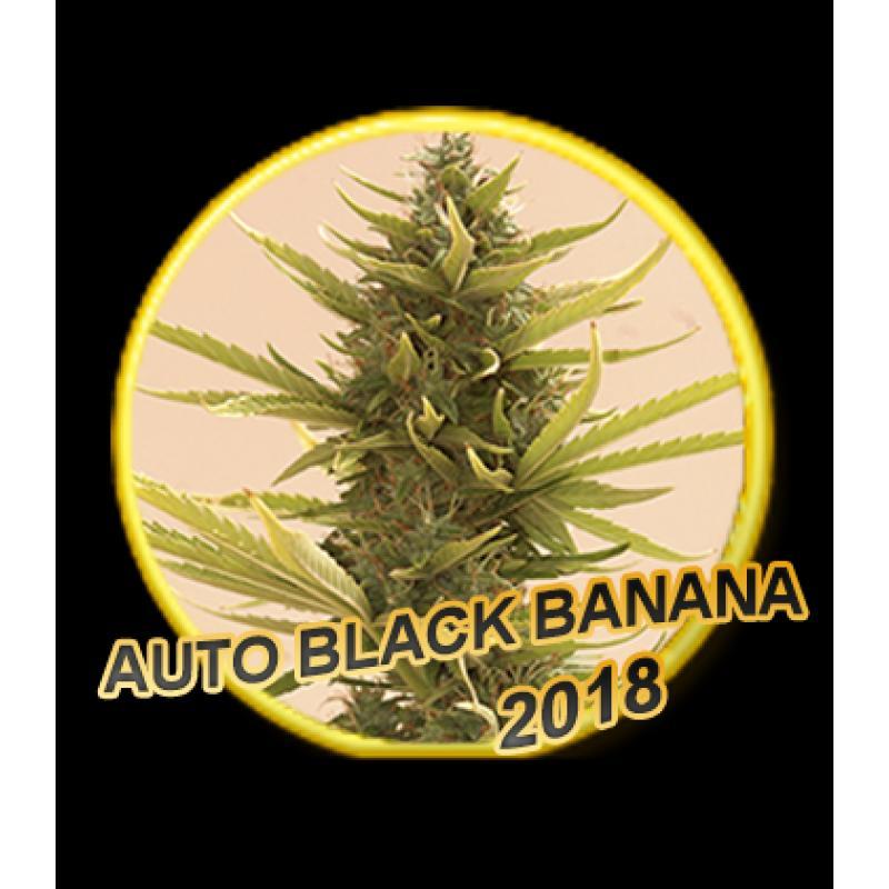 Mr Hide Seeds Auto Black Banana