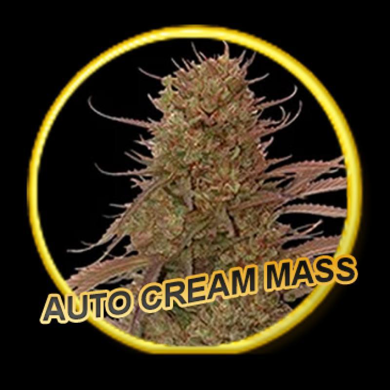 Mr Hide Seeds Auto Cream Mass