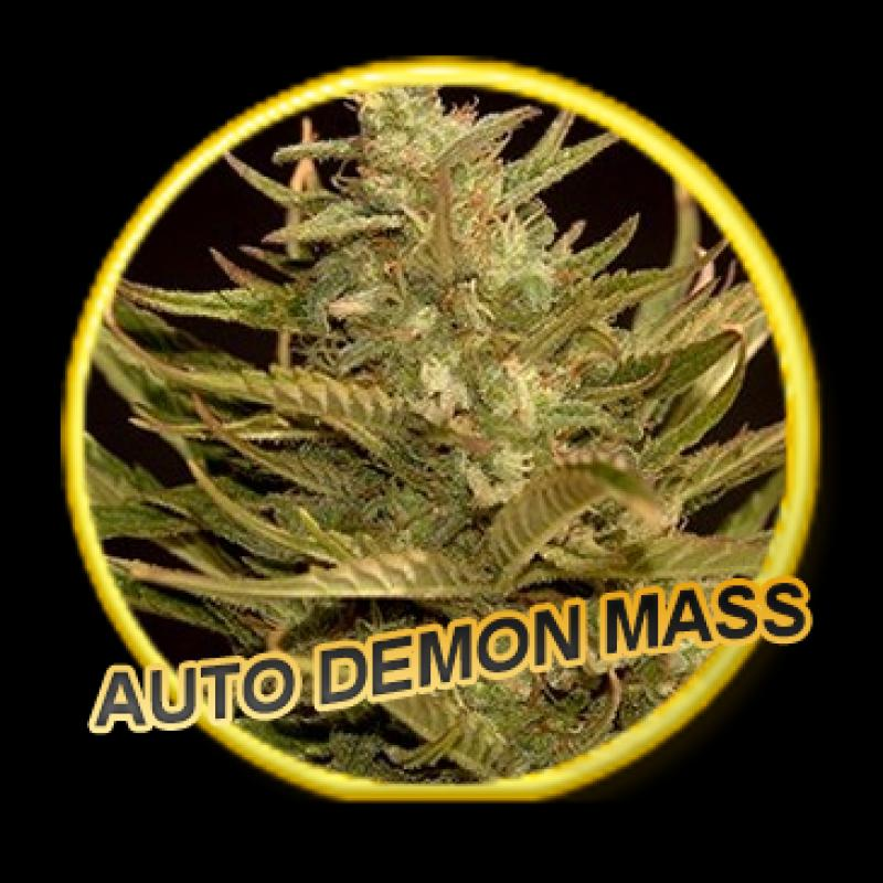 Mr Hide Seeds Auto Demon Mass