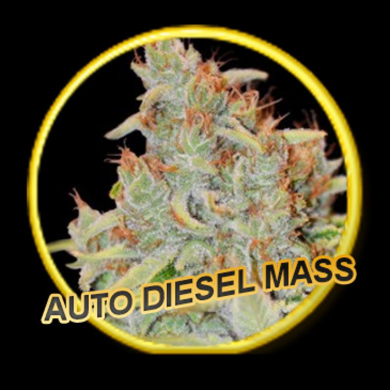 Mr Hide Seeds Auto Diesel Mass