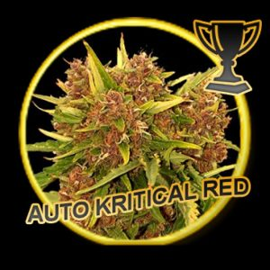 Mr Hide Seeds Auto Kritical Red
