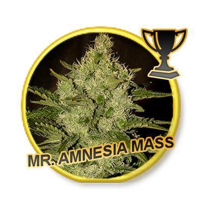 Mr Hide Seeds Mr. Amnesia Mass