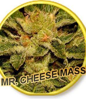 Mr Hide Seeds Mr. Cheese Mass