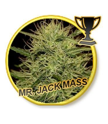 Mr Hide Seeds Mr. Jack Mass