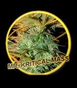 Mr Hide Seeds Mr. Kritical Mass