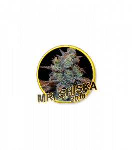 Mr Hide Seeds Mr. Shiska