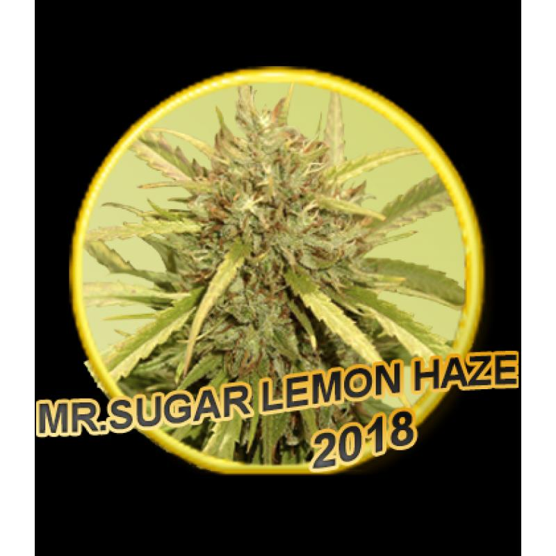 Mr Hide Seeds Mr.Sugar Lemon Haze