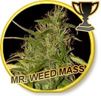 Mr Hide Seeds Mr. Weed Mass