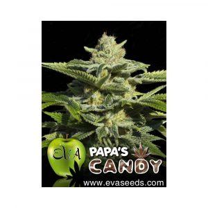 Eva Seeds Papa's Candy