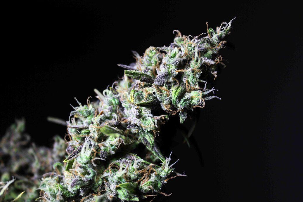 R-Kiem Seeds Icer