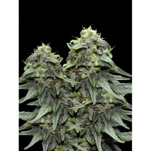 VIP Seeds BL4QKFY4H Weed