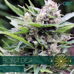 Vision Seeds Bona Dea Cbd+
