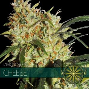 Vision Seeds Cheese