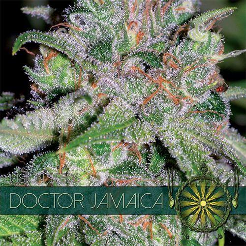 Vision Seeds Doctor Jamaica