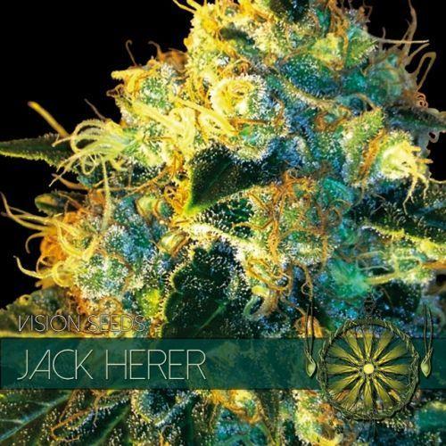 Vision Seeds Jack Herer